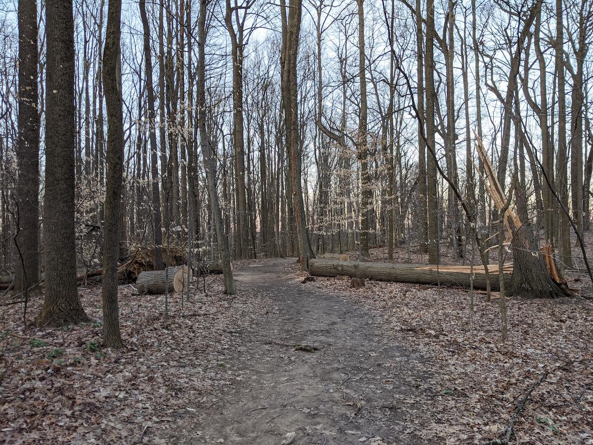 fallen tree scene